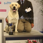 BOB MALE LABRADOR - LOCH MOR ROMEO - M BARBERI - 3RD OUT OF GROUP 8